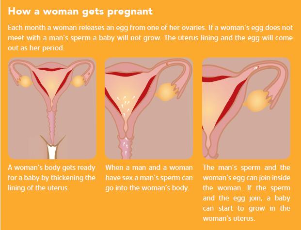 How a woman gets pregnant